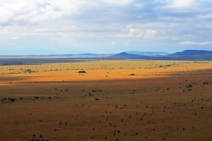 How Wealthy Affiliate can be like the serengeti plain