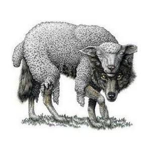 Allcoinhodler wolf in sheeps clothing