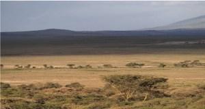 Wealthy Affiliate Serengeti
